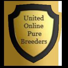United Online Pure Breeders
