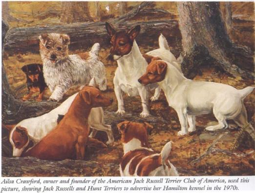 Jack Russell Terriers in a woods from the 1970s